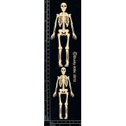 Skeletons (DA0756)